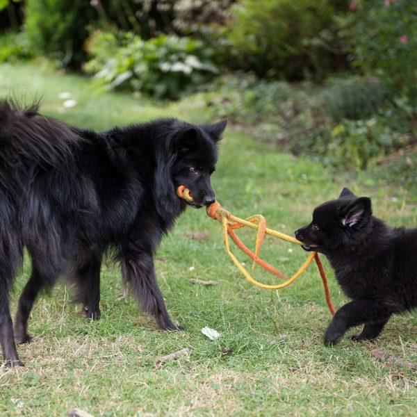 Dolly spielt mit Aki