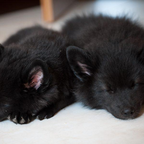 schlafende Geschwister